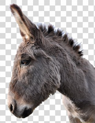Donkey PhotoScape Horse - Donkey PNG