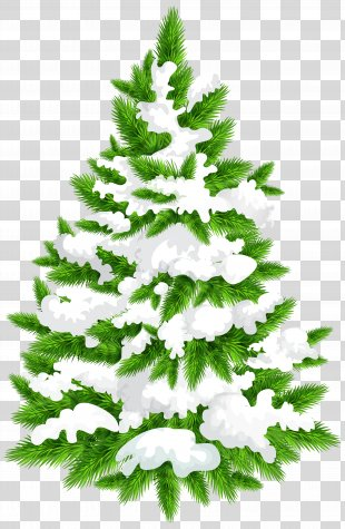 Pine Christmas Tree Clip Art - Snowy Pine Tree Clip Art Image PNG