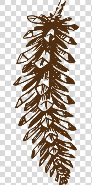 Pine Clip Art Conifer Cone Vector Graphics Openclipart - Fir Cone PNG