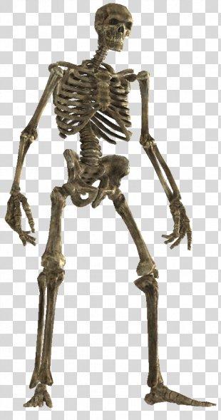 Skeleton The Elder Scrolls V: Skyrim Bone Wiki Classical Sculpture - Skeleton PNG