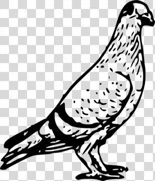 Homing Pigeon Columbidae Bird Pigeon Post Clip Art - Pigeon PNG