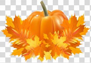Pumpkin Pie Cucurbita Pepo Cucurbita Argyrosperma Crookneck Pumpkin - Fall Leaves And Pumpkin Decoration Clip Art PNG
