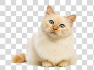 Cat Food Kitten Felidae Dog - Cat PNG