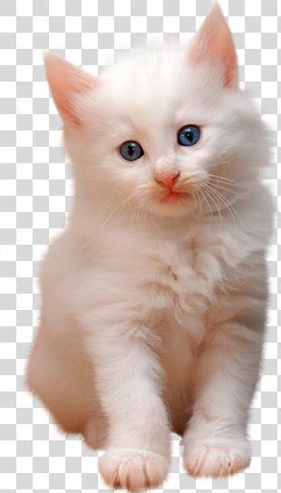 Cat Kitten - Cat PNG