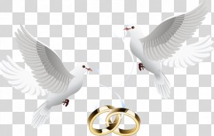 Wedding Invitation Clip Art - Dove Inlay Ring PNG