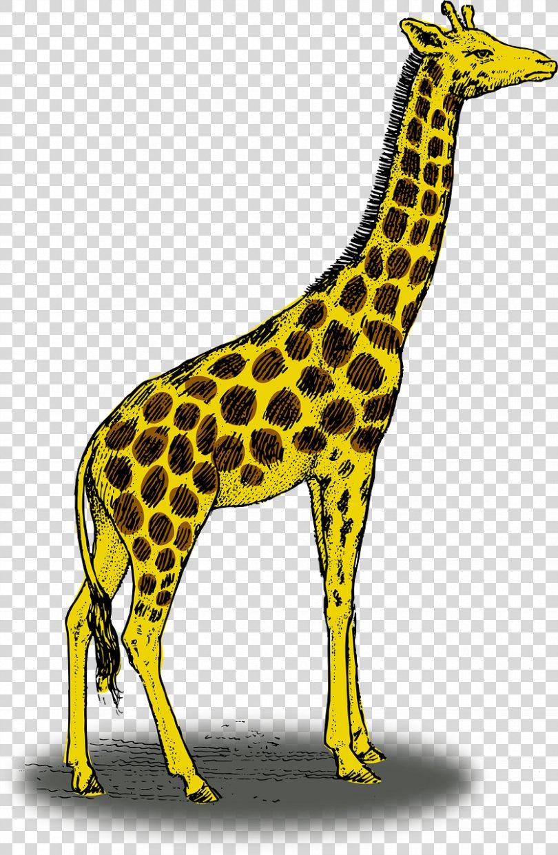 Giraffe Drawing Pencil Clip Art, Yellow Giraffe PNG