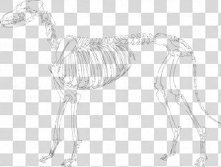 Skeleton Drawing Pekingese Sketch - Skeleton PNG