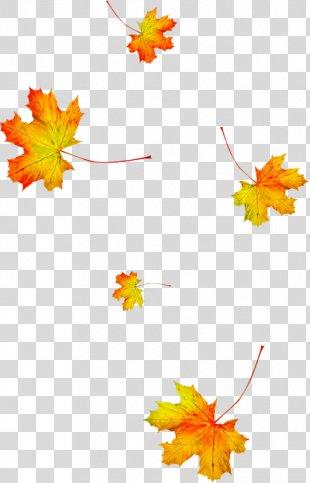 Autumn Leaves Animation Leaf Season - Autumn Leaves PNG