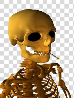 Skeleton Nose Human Behavior Organism Skull - Skeleton PNG