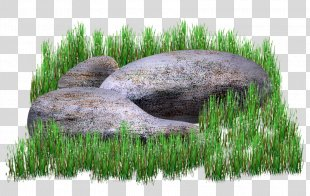 Grass Drawing Painting - Grass PNG