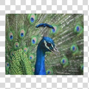 Bird Jigsaw Puzzles Peafowl Feather Peacock Jigsaw Puzzle - Peacock PNG