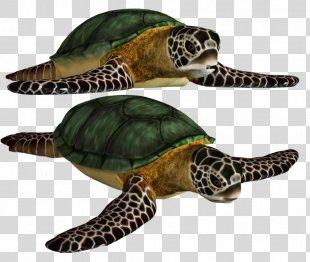 Sea Turtle - Green Sea Turtle Shell PNG