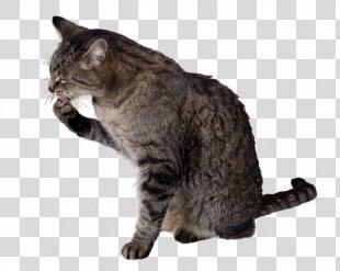 Cat Food Dog Felidae Personal Grooming - Cat PNG