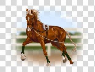 Horse Harnesses Stallion Horse Gait Rein - Horse PNG