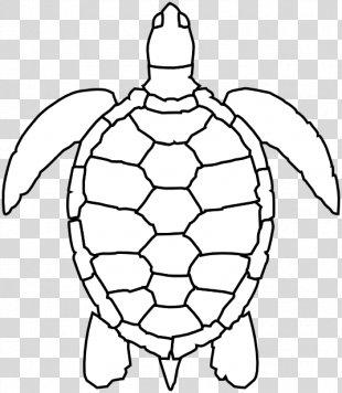 Green Sea Turtle Drawing Clip Art - Sea Turtle PNG