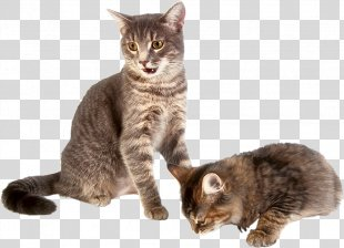 Cat Play And Toys Dog Kitten Cat Food - Cat PNG