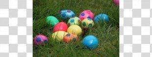 Easter Bunny Easter Bilby Egg Hunt Easter Egg - Egg Hunt PNG