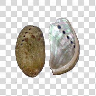 Seashell Red Abalone Haliotis Fulgens Monetaria Moneta - Seashell PNG