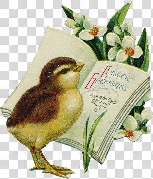 Easter Bunny Easter Egg Easter Postcard Clip Art - Easter PNG