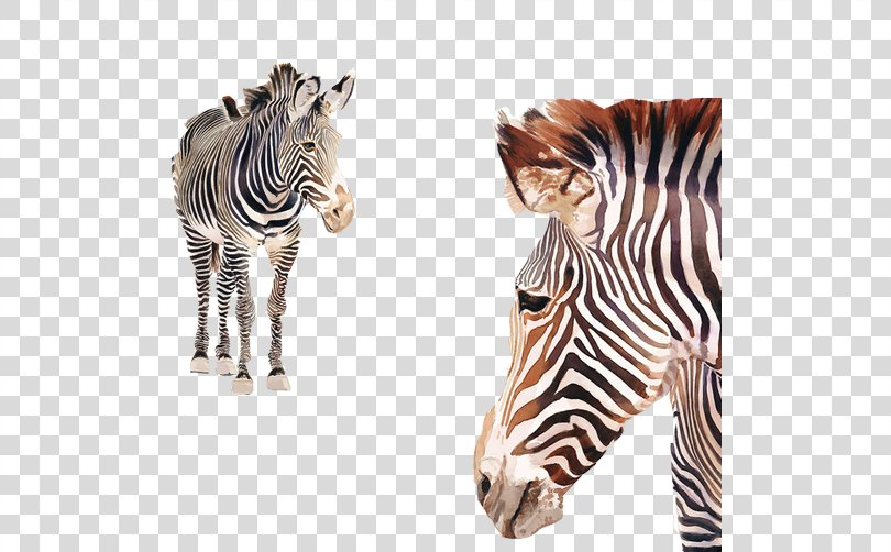 Horses Watercolor Painting Zebra Poster, Zebra Water-color Material Image PNG