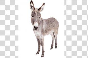 Donkey Horses Mule Stock Photography - Donkey PNG
