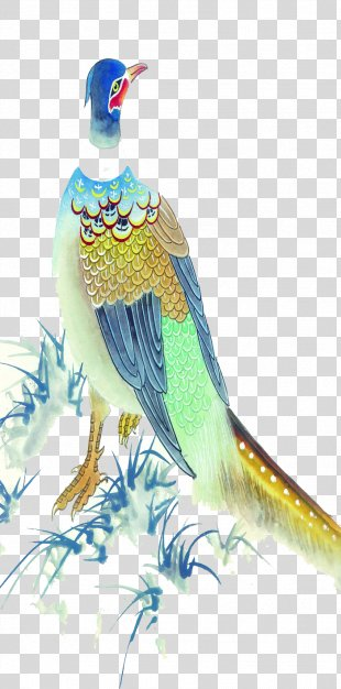 Peafowl Blue Peacock Illustration - Peacock PNG