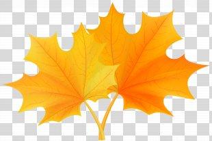 Autumn Leaf Color Clip Art - Fall Leaves Clip Art PNG