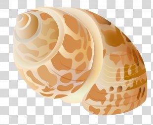 Seashell Clip Art - Seashell PNG
