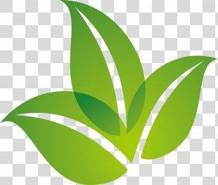 Leaf Logo - Spring Green Leaf Logo Design PNG