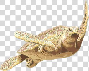 Sea Turtle Background - Sea Turtle Pond Turtle PNG
