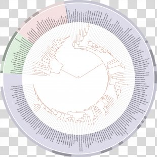 On The Origin Of Species Tree Of Life Phylogenetic Tree Evolution Biology - Tree Of Life PNG