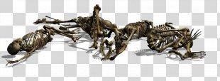 Skeleton Skull Gothic Art Photography Cemetery - Skeleton PNG
