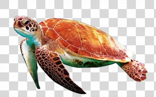 Sea Turtle Background - Reptile Kemps Ridley Sea Turtle PNG