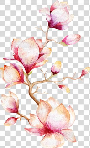 Watercolor Painting Magnolia Flower - Orchid Tree PNG