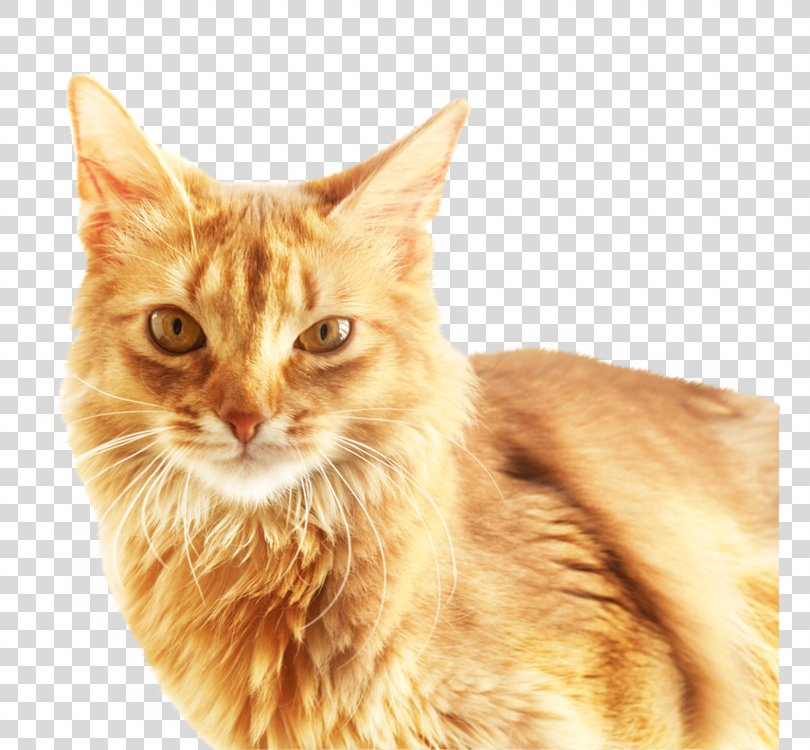Cat Download Software, Cute Cat PNG
