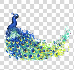 The Peacock Feather Peafowl Drawing Watercolor Painting Illustration - Watercolor Peacock PNG