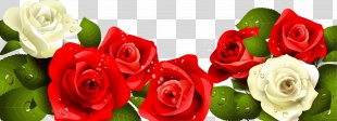 Happy Birthday To You Rose Greeting Card - Painted Red And White Roses Green Leaves PNG