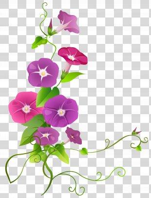 Clip Art - Ipomoea Flower Transparent Clip Art Image PNG