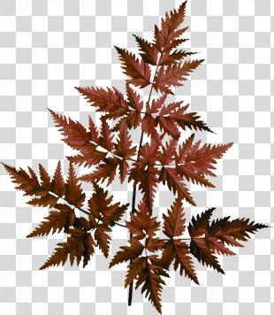 Autumn Leaves Leaf Kupala Night Clip Art - Autumn Leaves PNG