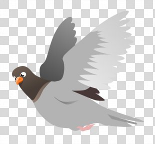 Homing Pigeon English Carrier Pigeon Columbidae Squab Clip Art - Pigeon PNG