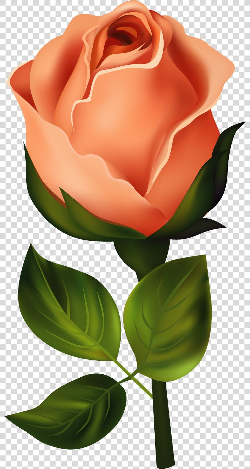 Rose Birth Flower Clip Art, Flower Painted PNG, Free Download