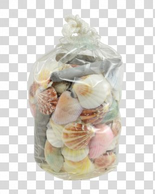 Seashell Sand Dollar Snail Conchs Conomurex Luhuanus - Seashell PNG