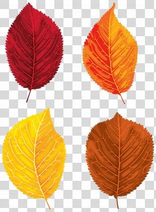 Santa Claus Autumn Leaf Color Clip Art - Fall Leaves Set Clipart Image PNG