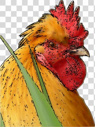 Rooster Chicken Poultry Farming Bird Phasianidae - Rooster PNG