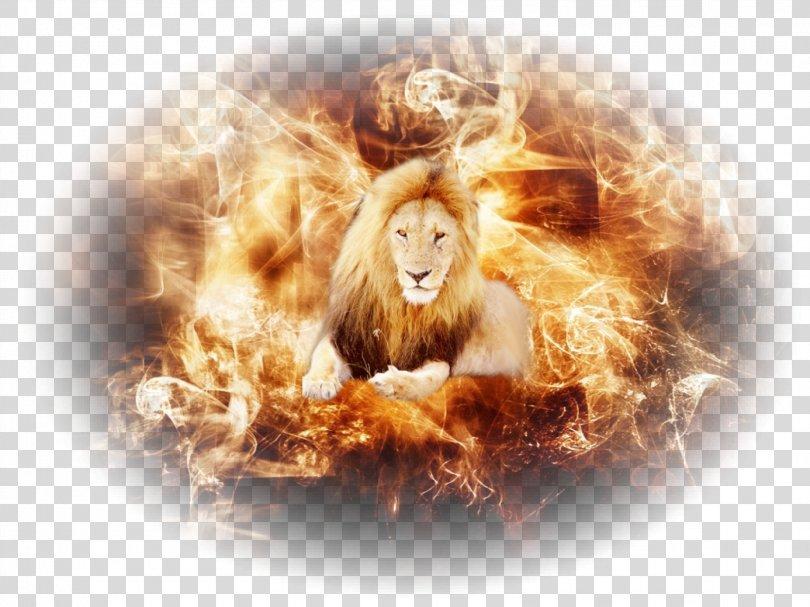 Desktop Wallpaper Fire Roar Flame Image, Fire PNG