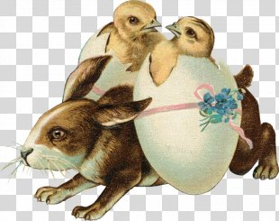 Easter Bunny Domestic Rabbit Easter Postcard Happy Easter! - Easter PNG