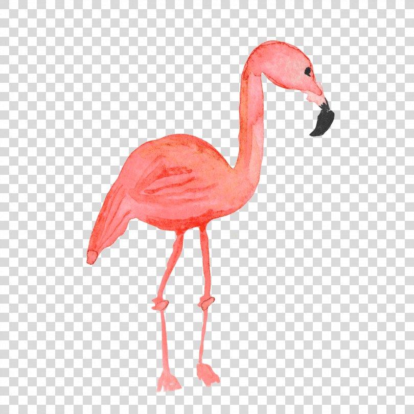 Flamingos Common Ostrich Bird, Flamingos PNG