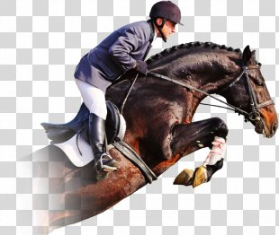 Horse Show Show Jumping Equestrian - Horse PNG