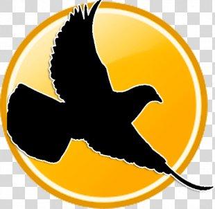 Racing Homer Columbidae Bird Pigeon Racing Pigeon Post - Bird PNG