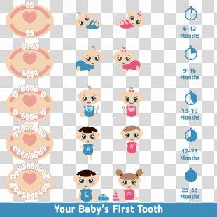 Teething Infant Deciduous Teeth Tooth Eruption - Cartoon Baby Teeth PNG